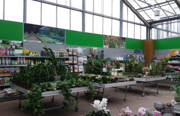 Grünpflanzen, Indoor-Pflanzen, Zimmerpflanzen und Zubehör aus der Gärtnerei Sinner