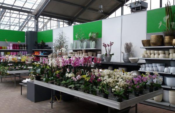 Zimmerpflanzen, Orchideen, Übertöpfe aus Tübingen